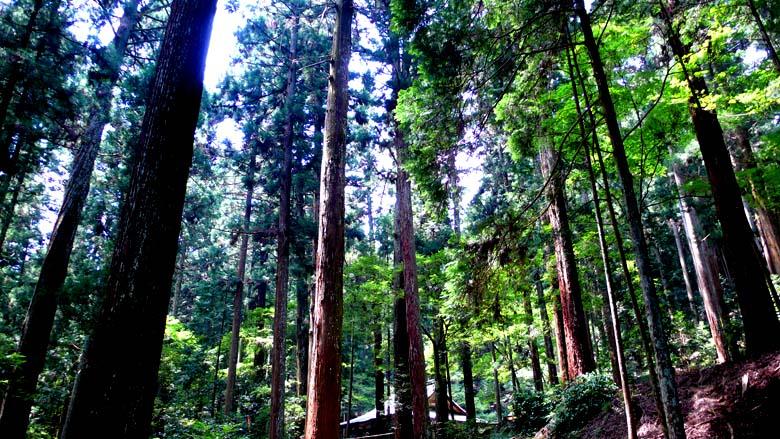 高山寺の新緑