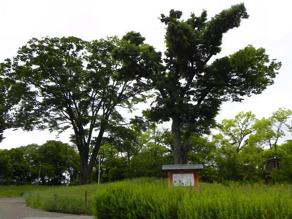 方広寺 大仏殿跡。現在、跡地には大木が立っている。